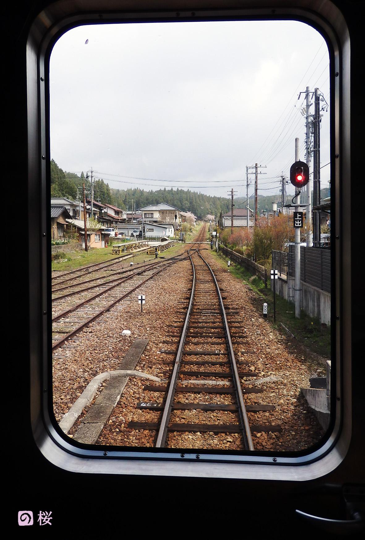 明智鉄道の桜