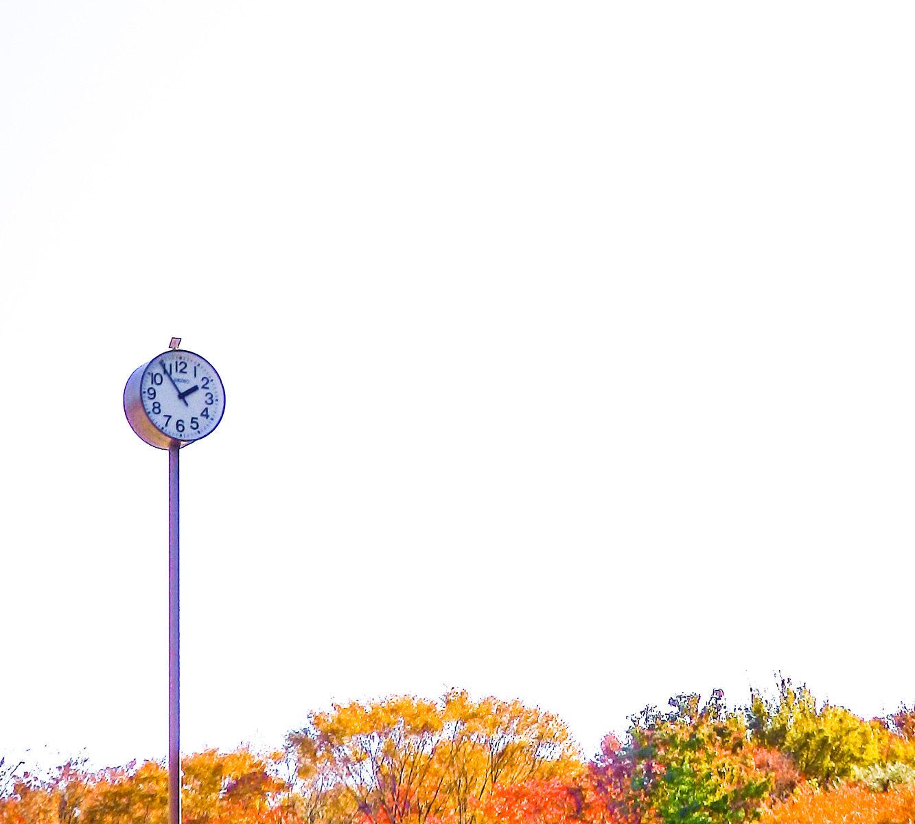 紅葉(コウヨウ)