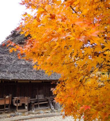 紅葉、山茶花
